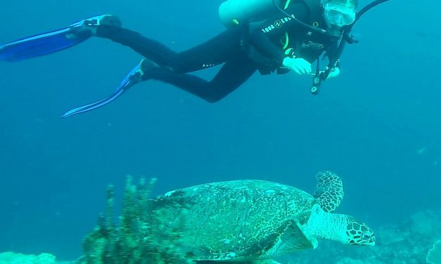 Where to go Scuba Diving and Snorkeling in Bali