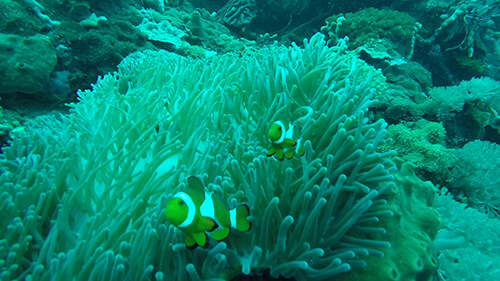 We Found Nemo Scuba Diving in Bali on Nusa Penida