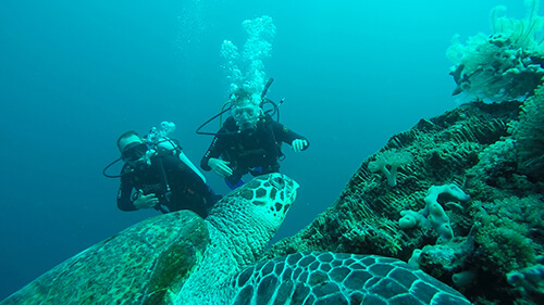 Video of Laptop Warriors Scuba Diving with Turtles in Bali